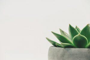 שתיל אפור עם צמח